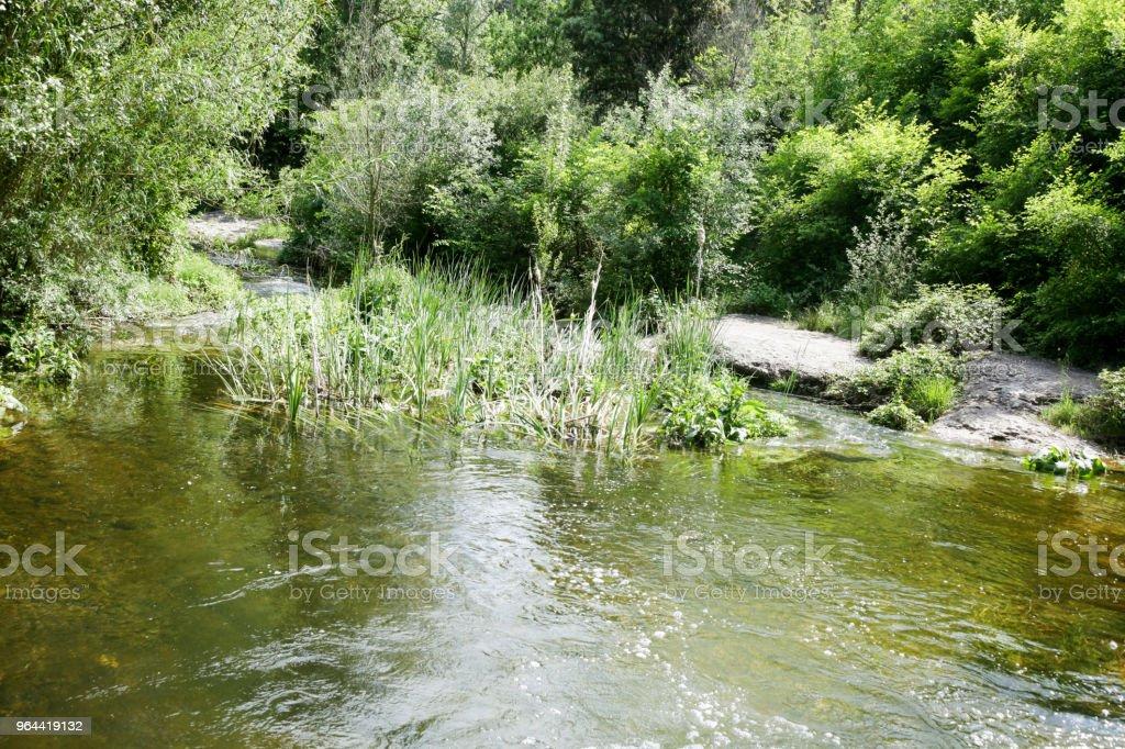 Localizado no parque natural - Foto de stock de Arbusto royalty-free