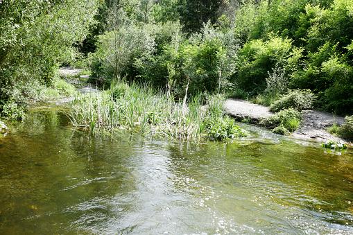 Foto de Localizado No Parque Natural e mais fotos de stock de Arbusto