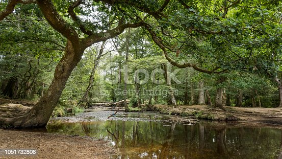 Small river in New forest Nature Park near Southampton (England, UK)