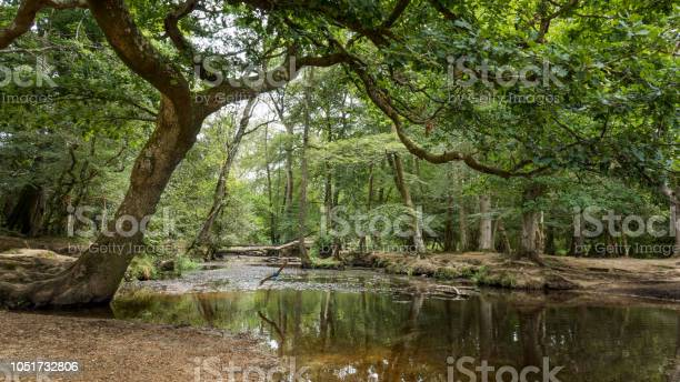 Photo of River in New Forest Nature Park near Southampton (England, UK)