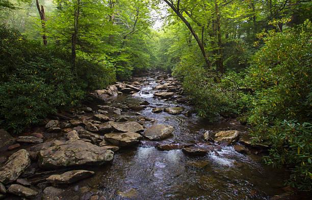 river in north carolina - bach stock-fotos und bilder