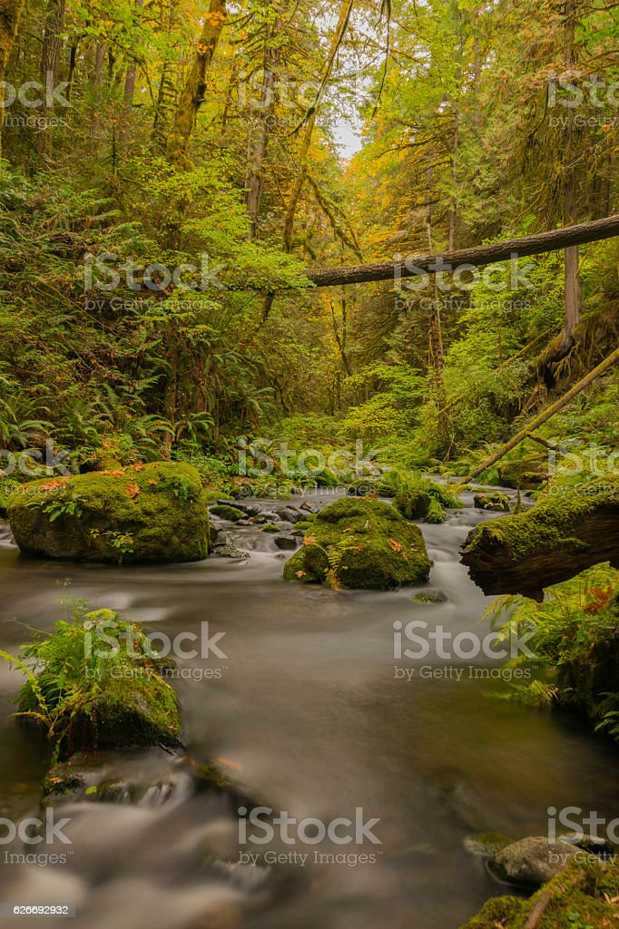 River in rainforest stock photo