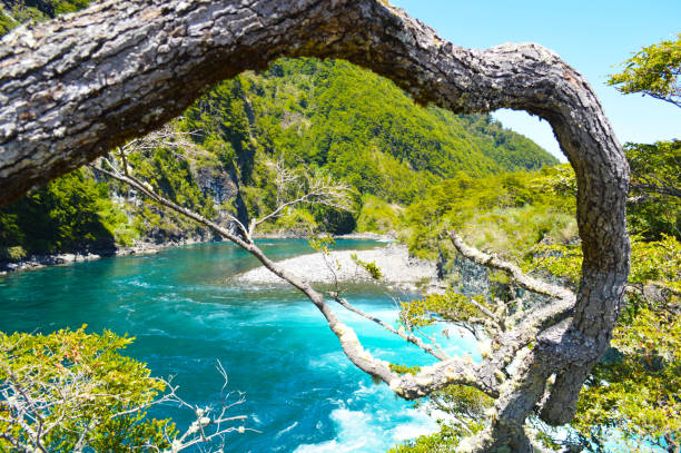 River in southern Chile stock photo