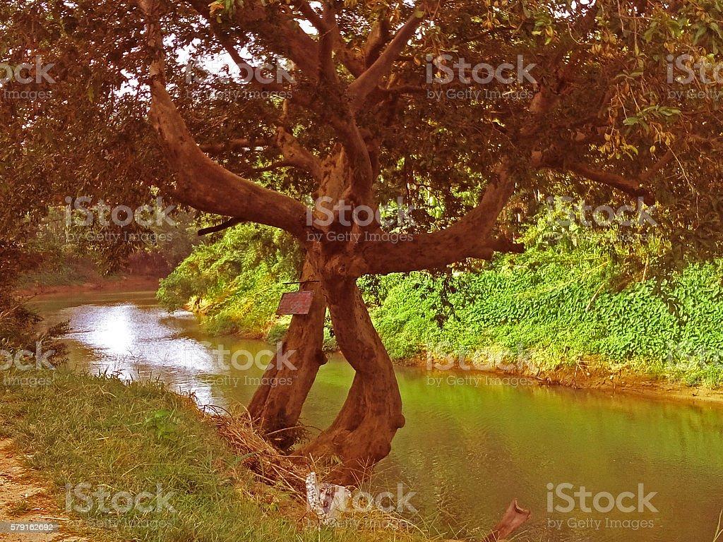 River in Sri Lanka stock photo