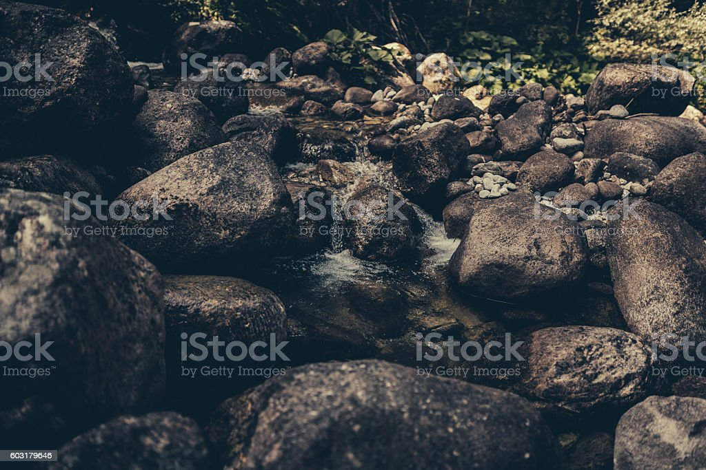 River in the dark forest stock photo