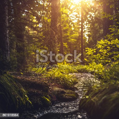 River in the forest at sunset