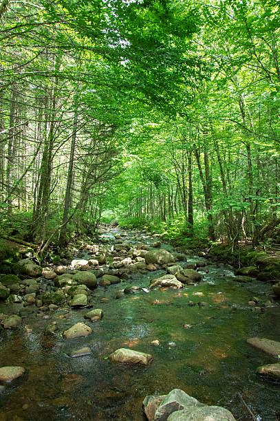 River in the forest, Jacques Cartier – Foto