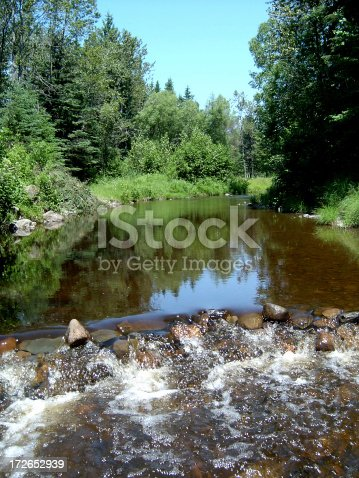 Small river in a Forest