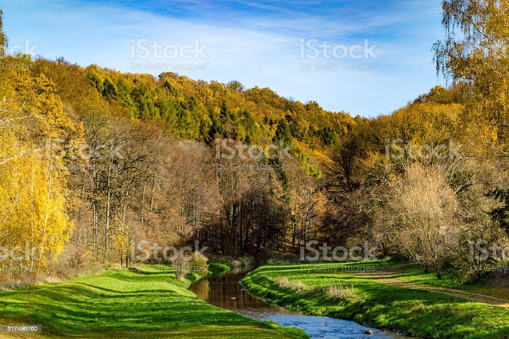 Fluss im Wald – Foto