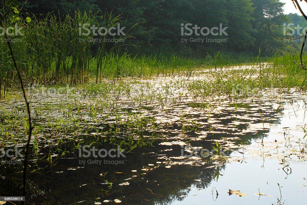 Fluss im Wald  Lizenzfreies stock-foto