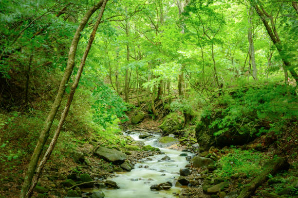 river in the forest - forest bathing foto e immagini stock