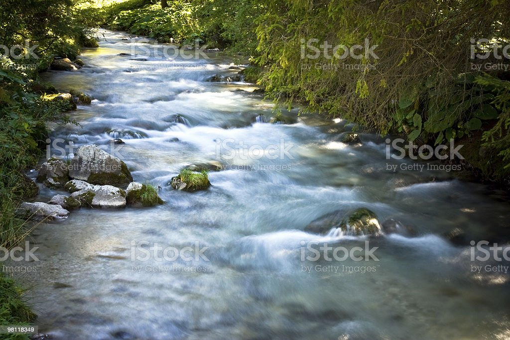 River in the forest royalty-free stock photo
