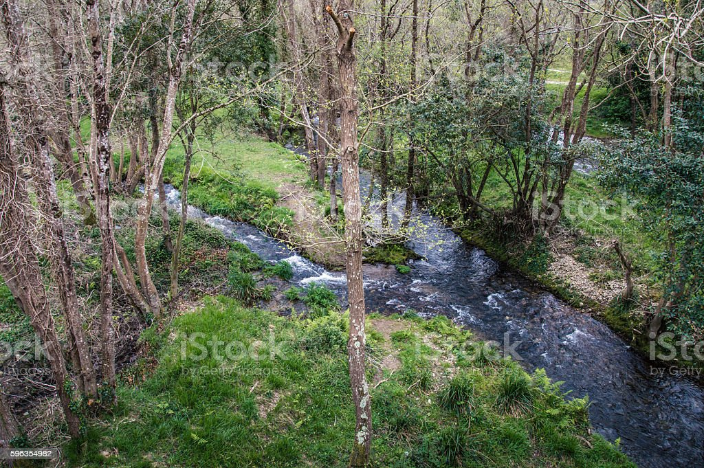 River in the forest with a natural island royalty-free stock photo