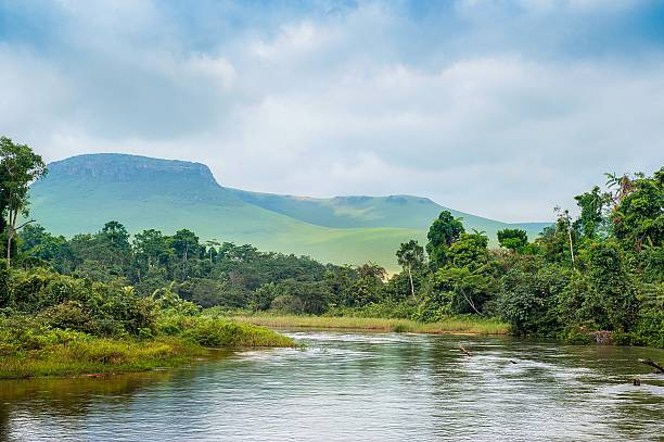 river in the jungle. - democratic republic of the congo stock photos and pictures