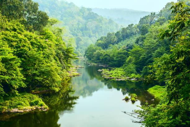 River in the jungle stock photo