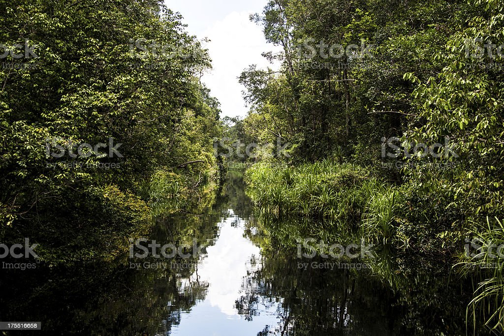 River in the rainforest of Borneo Indonesia royalty-free stock photo