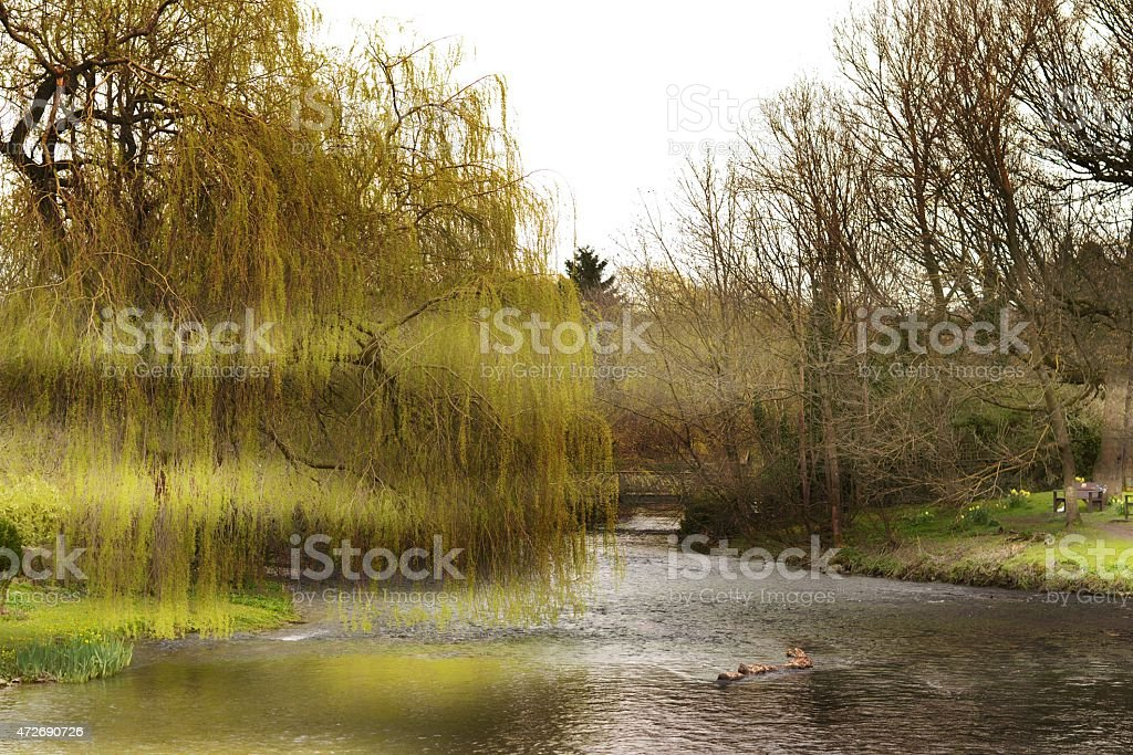 River in the Shadows. stock photo