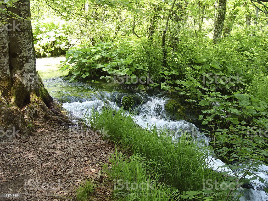 River in the Woods royalty-free stock photo