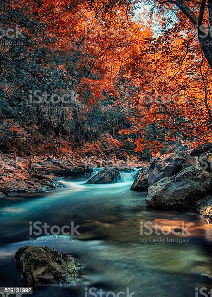 Photo of River in the woods