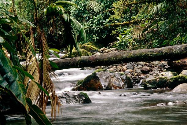 River in tropical rainforest, La Amistad National Park, Costa Rica stock photo