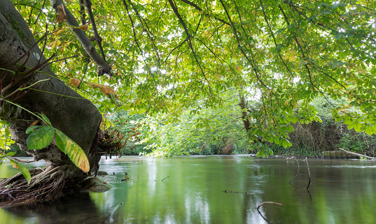 River Itchen in Eastleigh, Hampshire, UK