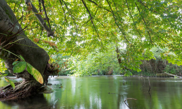 River Itchen in Eastleigh, Hampshire, UK stock photo