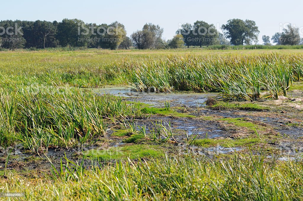 river landscape at a meandow on Havelland (Brandenburg) stock photo