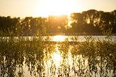 river landscape i a warm sunlight