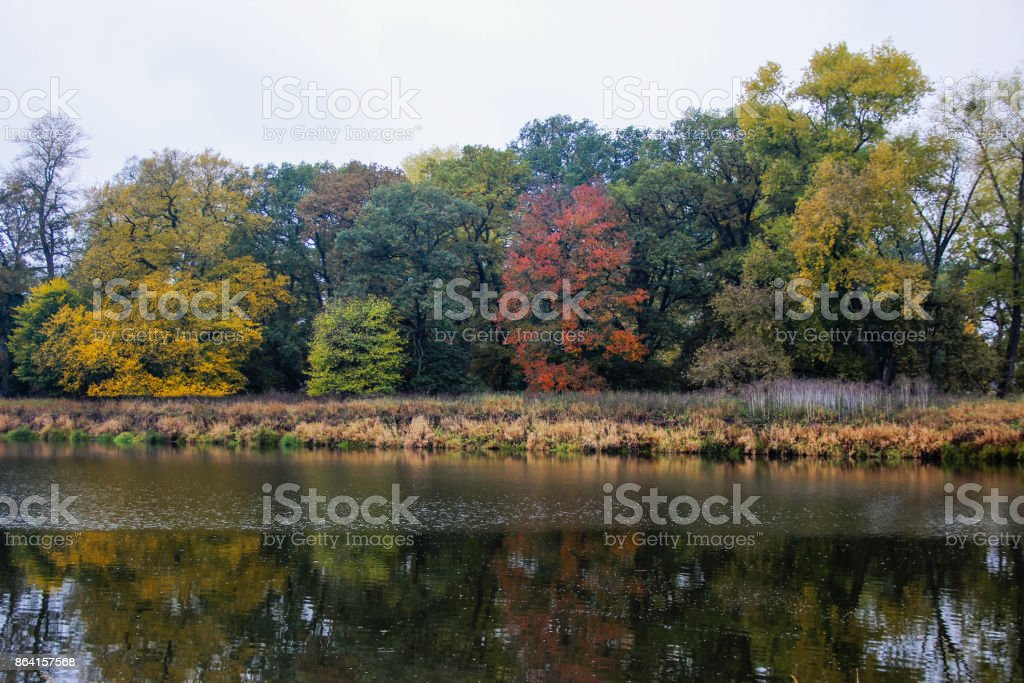 River landscape: trees in autumn royalty-free stock photo