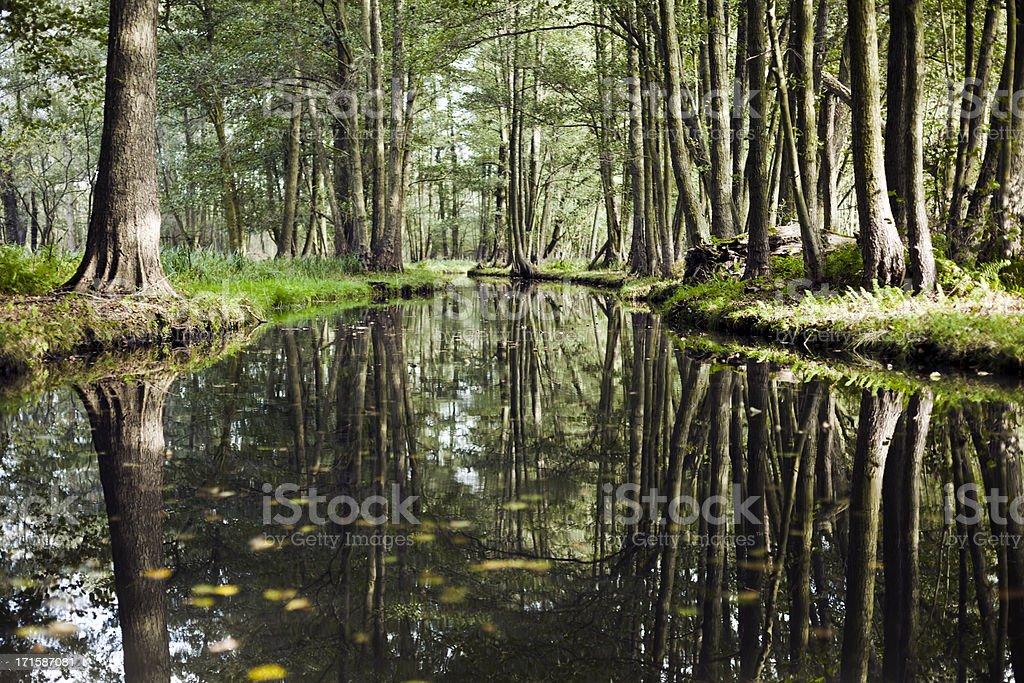 River Landschaft mit dunklen mystischen Wald. – Foto