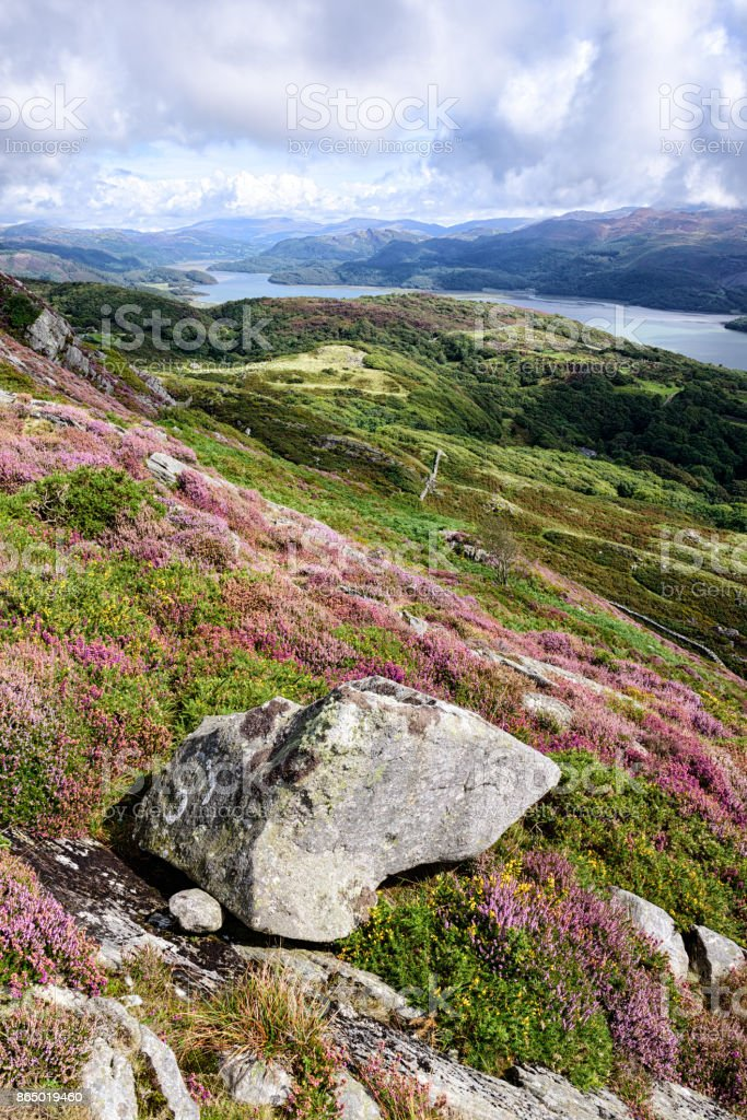 River Mawddach, Mountain Rocks,  Heather, Wales stock photo