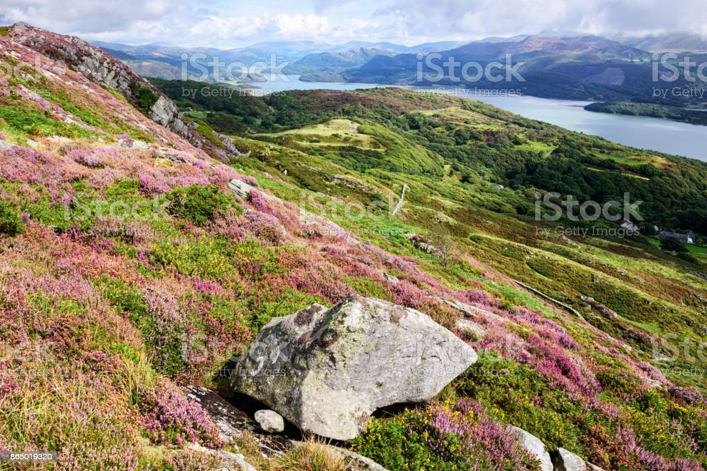 River Mawddach, Mountains and Heather, Wales stock photo