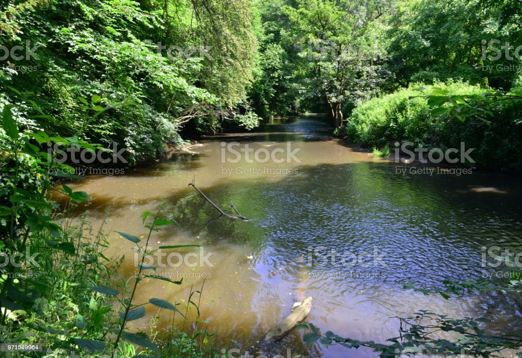 River mole on a summers day at Dorking in Surrey. stock photo