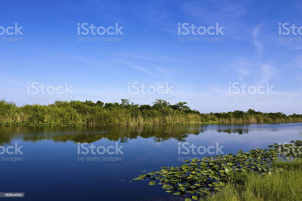 River of Grass stock photo