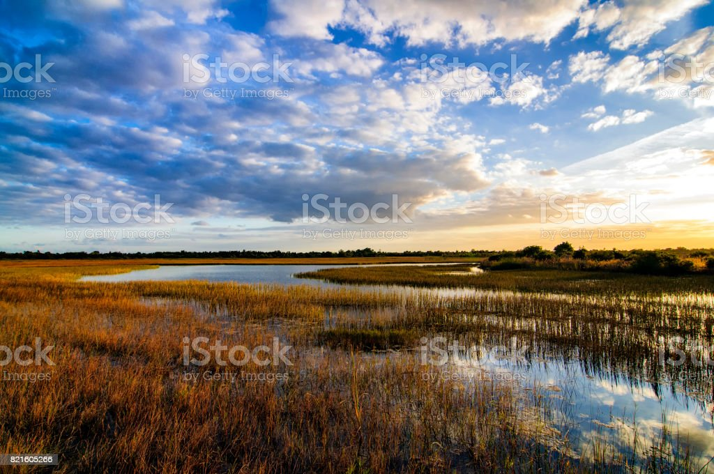 River of Grass Sunset stock photo