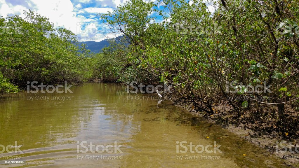River on the beach: mangrove stock photo