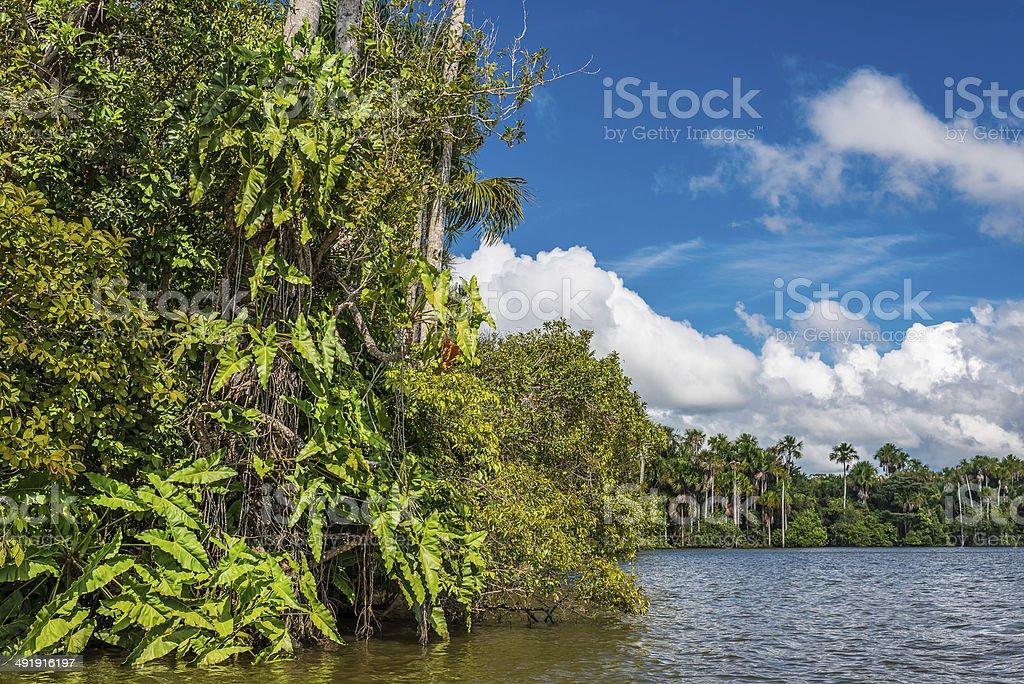 river peruvian Amazon jungle Madre de Dios Peru stock photo