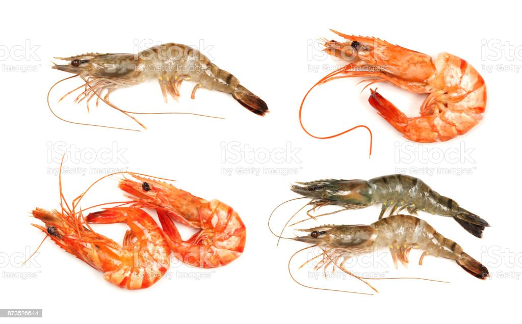 river prawns isolated on white background stock photo