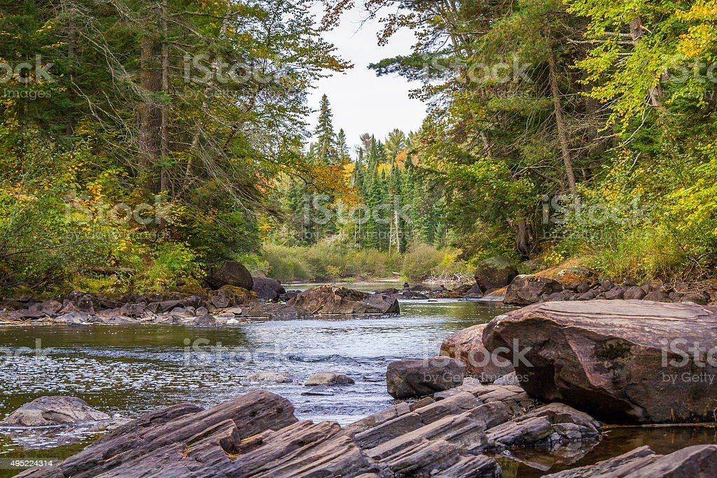 River Running Through a Forest in Early Fall stock photo