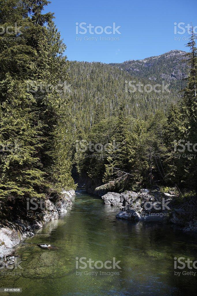 Fiume in esecuzione attraverso la foresta e montagne. foto stock royalty-free
