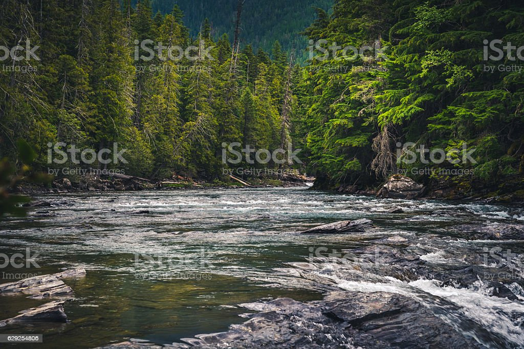 River rushing through a forest. - foto de stock