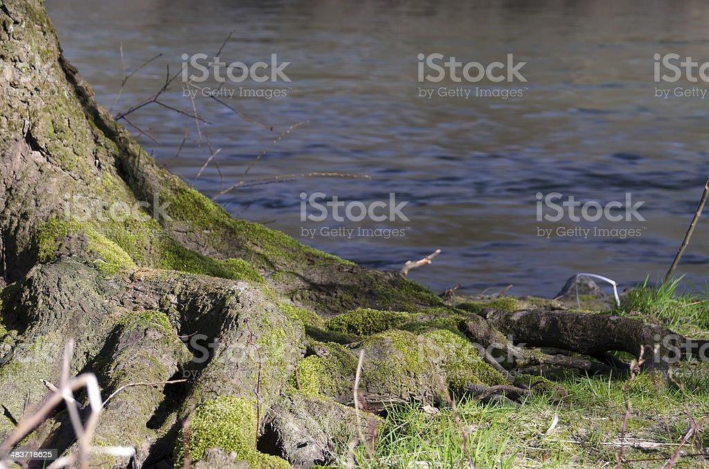 River scene stock photo