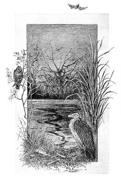 river scene with vulture, owl and bat - eule zeichnung stock-fotos und bilder