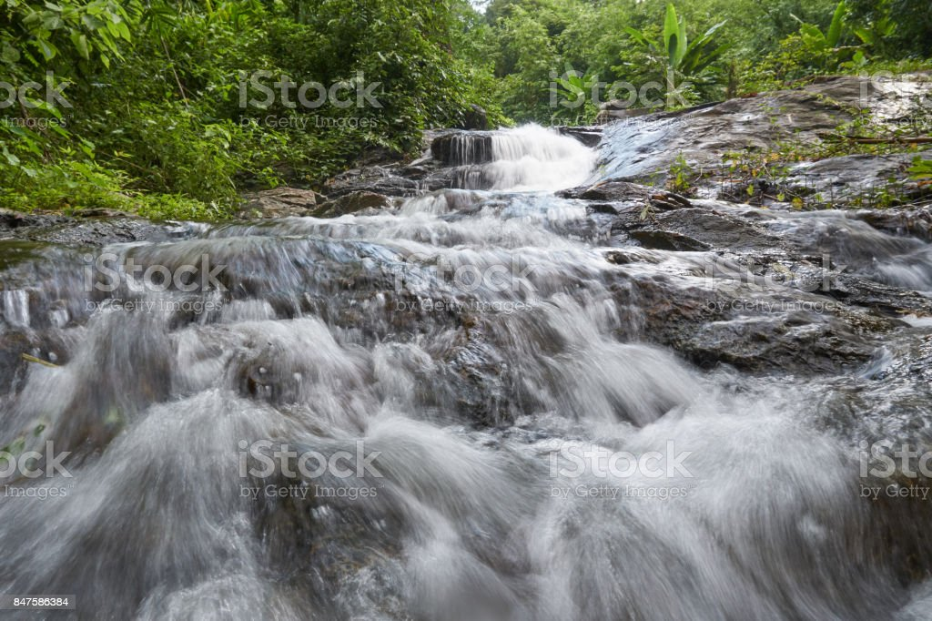 river source in the forest stock photo