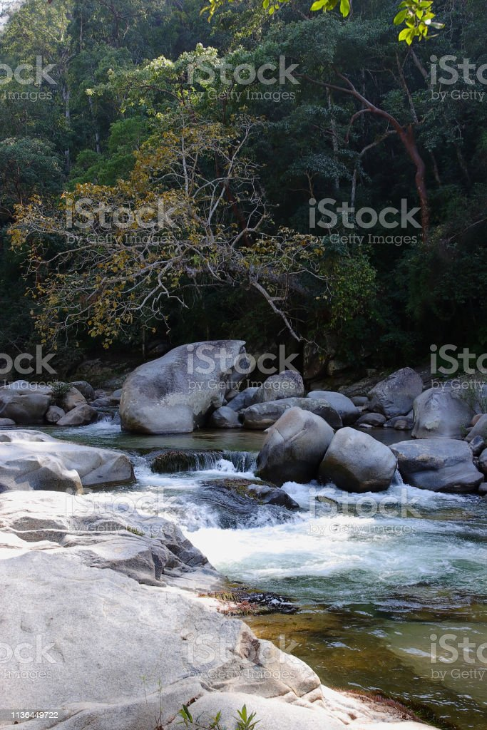 River stream in rainforest stock photo