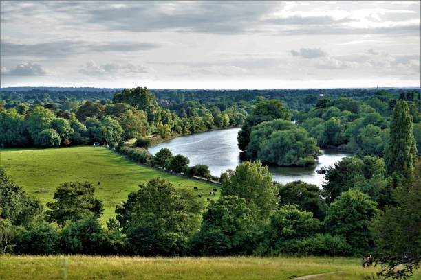 river thames - richmond park stock photos and pictures
