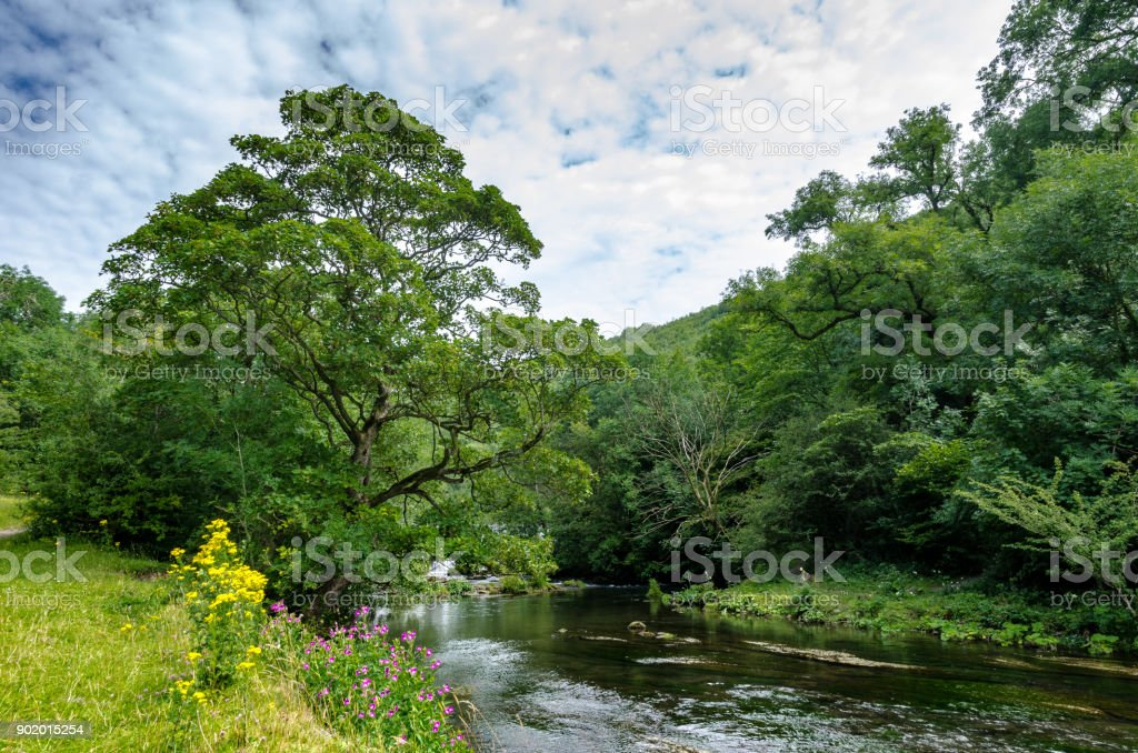 A river through a forest in summer stock photo