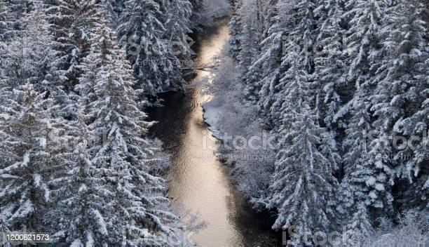 Photo of River through spruce trees in winter at sunset aerial