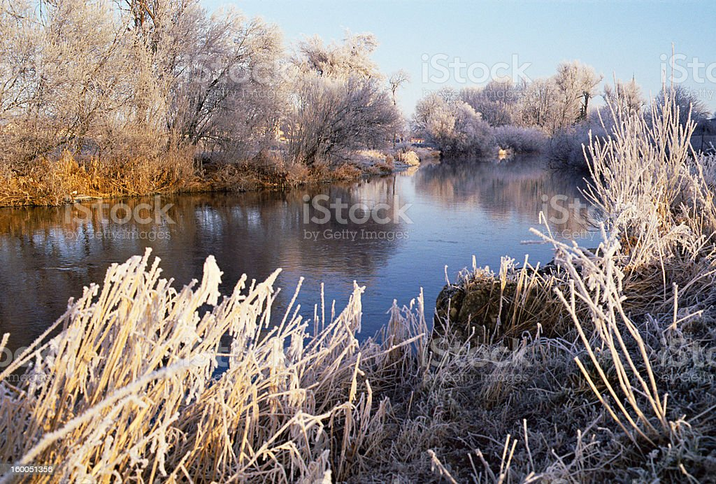 River, trees and reeds frozen stock photo