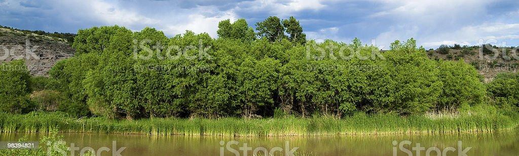 River trees royalty-free stock photo
